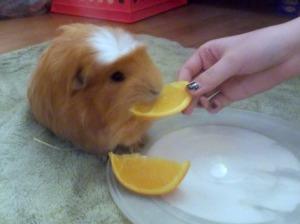 robbie eats